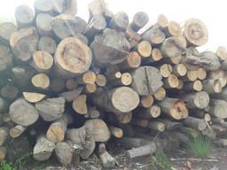 Дрова / Firewood / Brennholz - фото 7