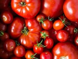 Färska tomater till salu