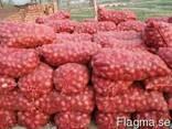 Fresh Red Onion - фото 2