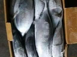 Frozen tuna - photo 1